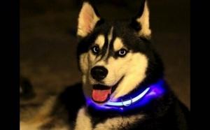 Zgarda LED cu lumini multicolore pentru animale, la 39 RON in loc de 79 RON! Garantie 12 luni!