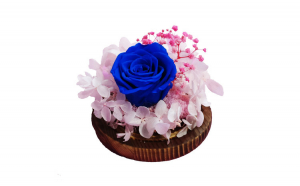 Trandafir Criogenat albastru, BV, Hortensia cu Licheni, 1CRIO