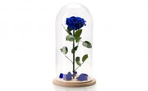 Trandafir criogenat Albastru Electric