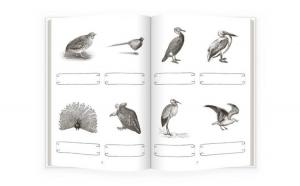 Activităţi de citire Montessori