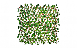 Gard lemn cu frunze  1800 x 600 vesnic verde