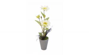 Floare ornamentala in ghiveci,