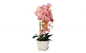 Floare decorativa in ghiveci, orhidee,