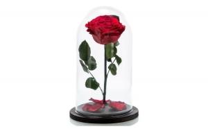 Trandafir criogenat - rosu