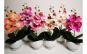 Aranjament orhidee silicon in ghiveci ceramic - 37 cm, diferite culori