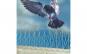 Modul Tepi Inox VOTTON ® R 200 ® 1 Metru Protectie Pasari  de Orice Marime
