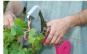 Aparat pentru legat vita de vie, pomi fructiferi, legume sau flori