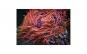 Tablou Canvas cu Animale 775 40 x 60 cm