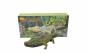 Jucarie Crocodile Pool