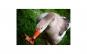 Tablou Canvas cu Animale 871 40 x 60 cm