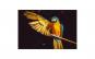 Tablou Canvas cu Animale 776 60 x 90 cm
