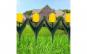 Bordura pt. strat de flori - cu lalele