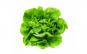 Salată verde românească, bucată