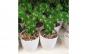 Aranjament Artificial Cactus