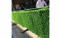 Paravan Imitatie Gard Viu, 1m x 10m