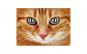 Tablou Canvas cu Animale 778 60 x 90 cm