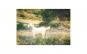 Tablou Canvas cu Animale 865 80 x 120