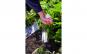 Plantator de bulbi (14 x 23 cm)