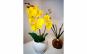 Aranjament orhidee silicon in ghiveci ceramic - 37 cm