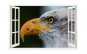 Sticker decorativ, Fereastra 3D, Vultur,