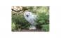 Tablou Canvas cu Animale 896 80 x 120
