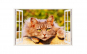 Sticker decorativ, Fereastra 3D, Pisica,