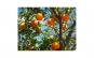 Tablou Canvas pentru bucatarie 307 20 x
