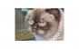 Tablou Canvas cu Animale 794 20 x 30 cm