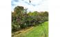 Zmeu Soim Negru - Black Hawk Kite