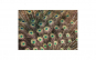 Tablou Canvas cu Animale 788 60 x 90 cm