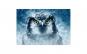 Tablou Canvas cu Animale 784 60 x 90 cm