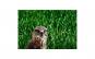 Tablou Canvas cu Animale 777 60 x 90 cm