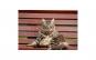 Tablou Canvas cu Animale 772 20 x 30 cm