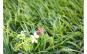 Gazon artificial, aspect iarba naturala,