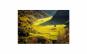 Tablou Canvas Toamna in Munti 50 x 75 cm rama de lemn ascunsa margini printate