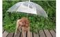 Umbrela pentru caini
