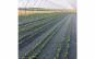 Agrotextil 1 m x 50 m