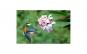 Tablou Canvas cu Animale 787 20 x 30 cm