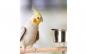 Suport pentru papagali cu 2 boluri XL