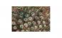 Tablou Canvas cu Animale 788 20 x 30 cm