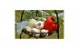 Tablou Canvas pentru Bucatarie 283 40 x