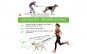 Lesa hands free de caini pentru alergare