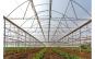 Folie solar 10.5m latime x 15m lungime