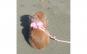 Ham cu lesa BIN BIN Pet pentru catelusi