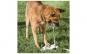 Fantana cu pedala Mypet - pentru animale de companie