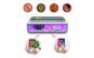 Incarcator Wireless si Sterilizator UV, MS Vision, pentru Smartphone cu display maxim de 7 inch, Sterilizare UV Universala pentru Chei, Bijuterii, Masca, Accesorii si Telefon, Alb