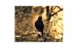 Tablou Canvas cu Animale 760 20 x 25 cm