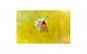 Tablou Canvas cu Animale 882 60 x 90 cm