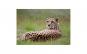 Tablou Canvas cu Animale 857 80 x 120