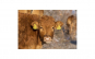 Tablou Canvas cu Animale 771 60 x 90 cm